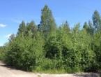 Продается дачный участок Павлово-Посадский р-н, д. Дальняя, СНТ «Рубин», 13 соток